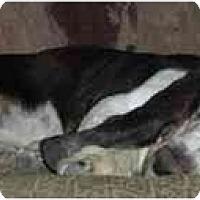 Adopt A Pet :: Solomon - Phoenix, AZ