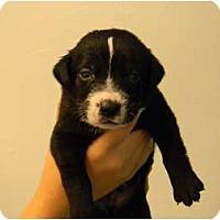 Adopt A Pet :: Trinidad - Cumming, GA