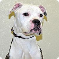 Adopt A Pet :: Lucky Lola - Port Washington, NY