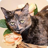 Adopt A Pet :: Caroline - Farmington Hills, MI