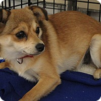 Adopt A Pet :: Macy - Meridian, ID