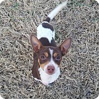 Adopt A Pet :: Kit - Homewood, AL