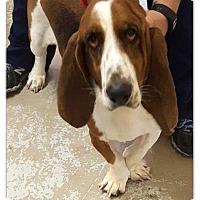 Adopt A Pet :: Jerome - Marietta, GA