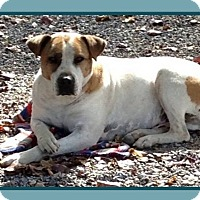 Adopt A Pet :: CHAZ - Dallas, NC