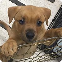Adopt A Pet :: Gina - Eastpointe, MI