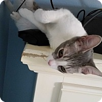 Adopt A Pet :: Eli - Fairborn, OH
