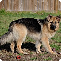 Adopt A Pet :: Trace - Mt. Airy, MD
