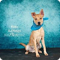 Adopt A Pet :: KOTA - Conroe, TX