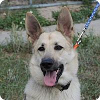 Adopt A Pet :: Sasha - Citrus Springs, FL