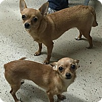 Adopt A Pet :: Margarita and Tater Tot - Hagerstown, MD