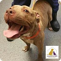 Adopt A Pet :: Pumpkin - Eighty Four, PA