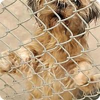 Adopt A Pet :: Dottie - Boulder, CO