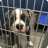 Adopt A Pet :: Eddie - Henderson, NC