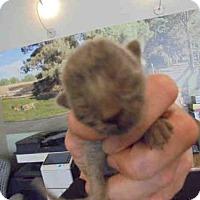 Adopt A Pet :: A044339 - Upland, CA