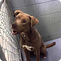 "Adopt A Pet :: Nick ""saint nick"" - E. Greenwhich, RI"