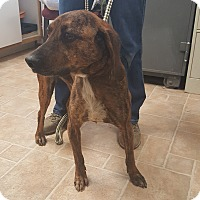 Adopt A Pet :: Tucker - Cody, WY