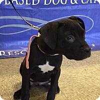 Adopt A Pet :: Osha - Trenton, NJ