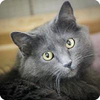Adopt A Pet :: Beastly - Marlton, NJ