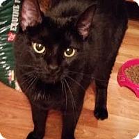 Adopt A Pet :: Midnight - Manhattan, KS