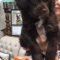 Adopt A Pet :: Moon - Thousand Oaks, CA