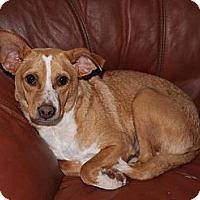 Adopt A Pet :: Tonto - Vidor, TX