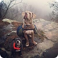 Adopt A Pet :: Boaz - Hixson, TN