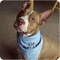 Adopt A Pet :: Kingu - Indianapolis, IN