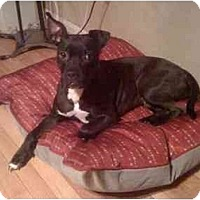 Adopt A Pet :: Stormy - Reisterstown, MD