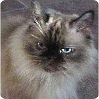 Adopt A Pet :: Chloe - Davis, CA