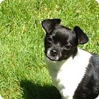 Adopt A Pet :: ROO - Portland, OR