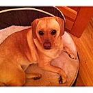 Adopt A Pet :: Butterball