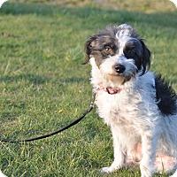 Adopt A Pet :: Bonny - Tumwater, WA