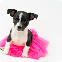 Adopt A Pet :: Gemini - Austin, TX