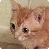 Adopt A Pet :: Danny - Austin, TX