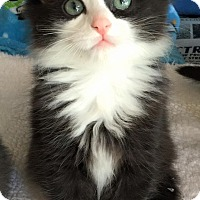 Adopt A Pet :: Mr. Bojangles - Island Park, NY