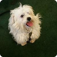 Adopt A Pet :: SCOOTER - Gustine, CA