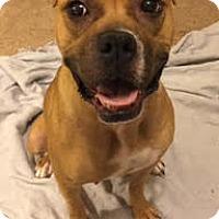 Adopt A Pet :: Cayenne - Plainfield, IL