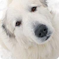 Adopt A Pet :: Coco in NY - pending - Beacon, NY