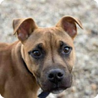 Adopt A Pet :: ROCKO - Upper Marlboro, MD