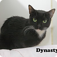 Adopt A Pet :: Dynasty - Oakland, NJ