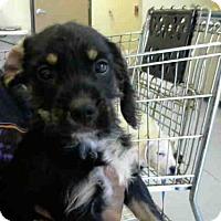 Adopt A Pet :: REX - Conroe, TX