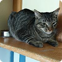 Adopt A Pet :: Odyssey - Yucaipa, CA