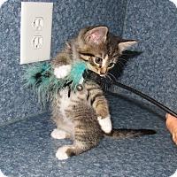 Adopt A Pet :: Emmie - Harrisburg, NC