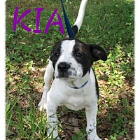 Adopt A Pet :: Kia POM-DC - Allentown, PA