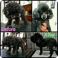 Adopt A Pet :: Dee Oh Gee - Glendale, AZ