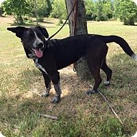 Adopt A Pet :: Blake - Mechanicsburg, OH