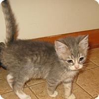 Adopt A Pet :: Flip - Bedford, VA