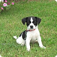 Adopt A Pet :: JACE - Bedminster, NJ