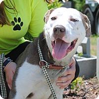 Adopt A Pet :: Apple - Windsor, VA