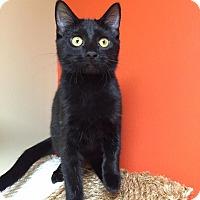 Adopt A Pet :: Loyola - Maryville, MO